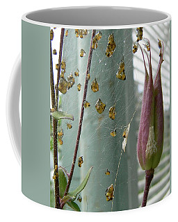 Coffee Mug featuring the photograph Birth Of A Spider by Pamela Patch