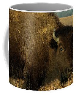 Bison Coffee Mug by Jay Stockhaus