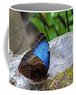 Coffee Mug featuring the photograph Black And Blue Butterfly Eating by Raphael Lopez