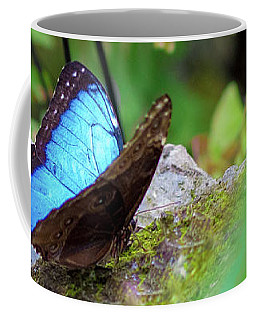 Coffee Mug featuring the photograph Black And Blue Butterfly by Raphael Lopez