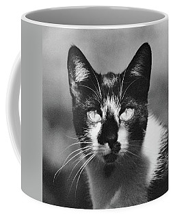 Black And White Cat Close Up Coffee Mug