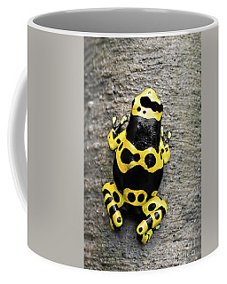Coffee Mug featuring the photograph Black And Yellow Poison Dart Frog by Barbara McMahon