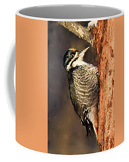 Black-backed Woodpecker Coffee Mug