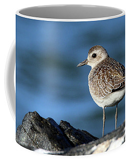 Black-bellied Plover Westhampton New York Coffee Mug