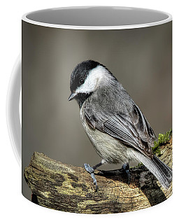 Black-capped Chichadee Coffee Mug