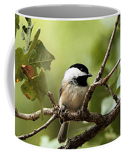 Black Capped Chickadee On Branch Coffee Mug