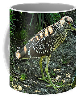 Black Capped Night Heron   Juvenile Coffee Mug by Elaine Manley