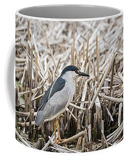 Black-crowned Night Heron 2017-1 Coffee Mug