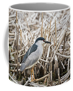 Black-crowned Night Heron 2017-1 Coffee Mug by Thomas Young
