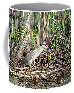Black-crowned Night Heron 2018-1 Coffee Mug