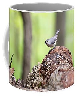 Black-eyed Junco 1 Coffee Mug