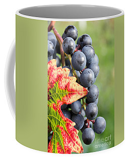 Black Grapes On The Vine Coffee Mug