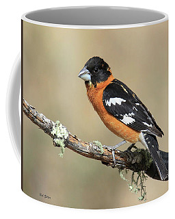 Black-headed Grosbeak Coffee Mug