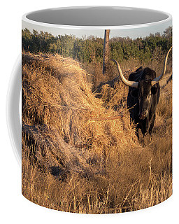 Coffee Mug featuring the photograph Black Longhorn Looking Left  In Sunny Day by PorqueNo Studios