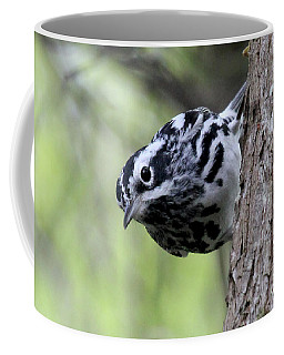 Black-n-white Warbler Coffee Mug