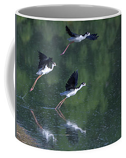 Black-necked Stilts 4302-080917-2cr Coffee Mug
