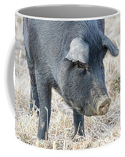 Coffee Mug featuring the photograph Black Pig Close-up by James BO Insogna