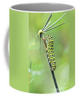 Black Swallowtail Caterpillar Coffee Mug by Debbie Green