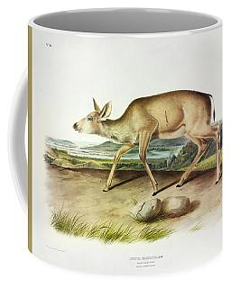 Black-tailed Deer Coffee Mug