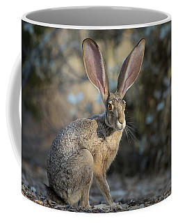 Black-tailed Jackrabbit Coffee Mug