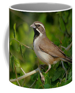 Black-throated Sparrow Coffee Mug