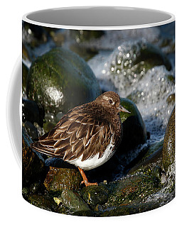 Black Turnstone Coffee Mug