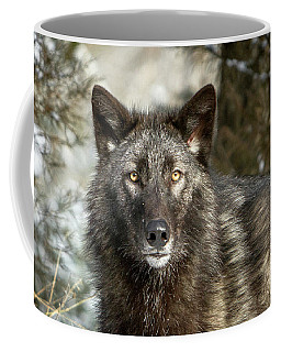 Coffee Mug featuring the photograph Black Wolf by Jack Bell