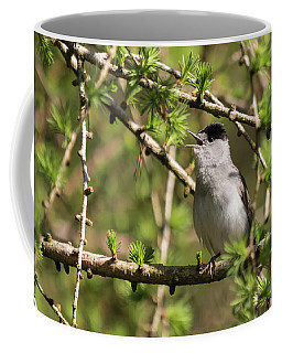 Blackcap Serenade Coffee Mug