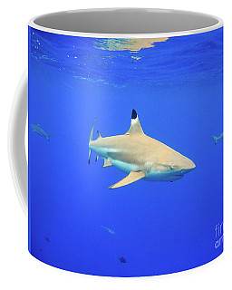 Blacktip Reef Shark Coffee Mug