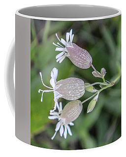 Bladder Campion Coffee Mug