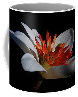 Bloodroot Art Coffee Mug