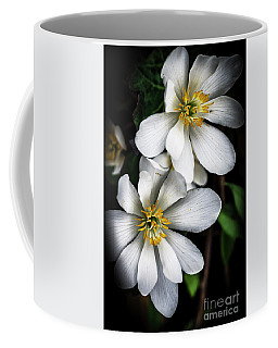 Coffee Mug featuring the photograph Bloodroot In Bloom by Thomas R Fletcher