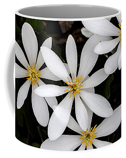 Coffee Mug featuring the photograph Sanguinaria by Skip Tribby