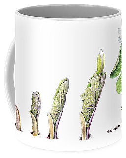 Bloodroot Unfolding II Coffee Mug