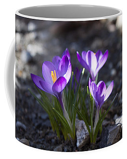 Coffee Mug featuring the photograph Blooming Crocus #3 by Jeff Severson