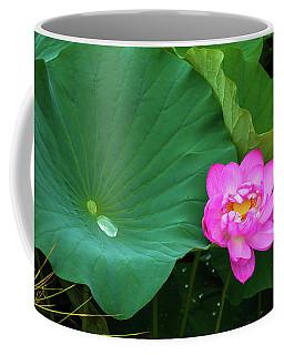 Blooming Pink And Yellow Lotus Lily Coffee Mug