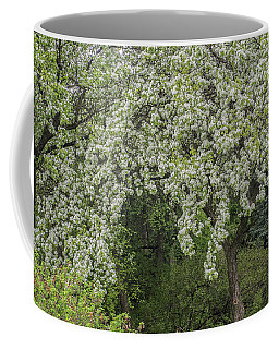 Coffee Mug featuring the photograph Blooming Trees by Vladimir Kholostykh