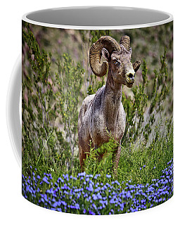 Blooms And Bighorn In Anza Borrego Desert State Park  Coffee Mug