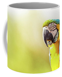 Blue And Yellow Macaw With Copy Space Coffee Mug