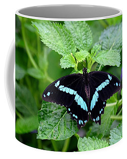Blue Banded Swallowtail Butterfly Coffee Mug