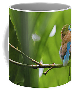 Coffee Mug featuring the photograph Blue Bird Has An Itch by Raphael Lopez