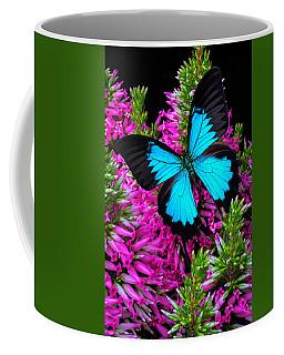 Blue Butterfly On Heather Coffee Mug