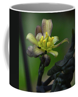 Blue Cohosh 1 Coffee Mug