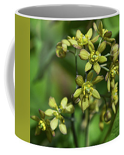 Blue Cohosh 3 Coffee Mug