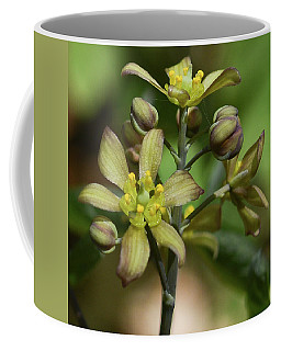 Blue Cohosh 2 Coffee Mug