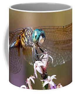 Blue Dasher Dragonfly Resting Coffee Mug