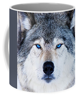 Coffee Mug featuring the photograph Blue Eyed Wolf Portrait by Mircea Costina Photography