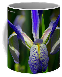 Blue Flag Iris Coffee Mug