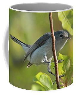 Blue Gray Gnatcatcher Coffee Mug