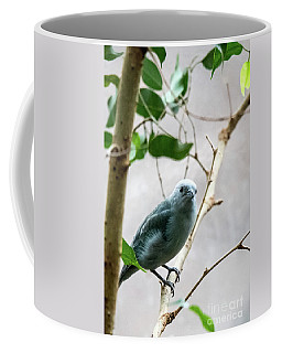 Blue-grey Tanager 2 Coffee Mug